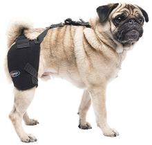 Caldera Pet Therapy Hip Wrap with Gel