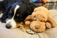 Smart Pet Love Snuggly Puppy Behavioral Aid