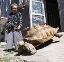 China's 'Turtle Granny' Enjoys Daily Walks With Pet Giant Tortoise