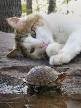 Cat and Turtle Friends