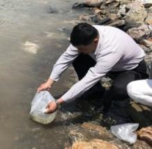 Puffer Fish Fan Seeks To Single-Handedly Restock River