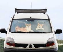 Shiba Dogs Chill Out On This Cool Car Windshield Sunshade