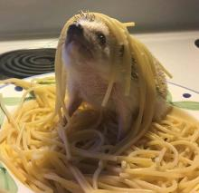 Spaghetti and Hedgehog