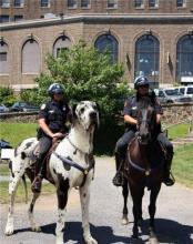 Mounted Police Dogs