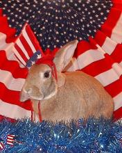 Stars and Stripes Bunny