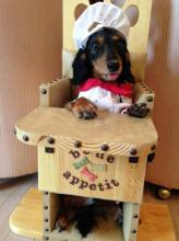 Bailey Chair for Dogs with megaesophagus