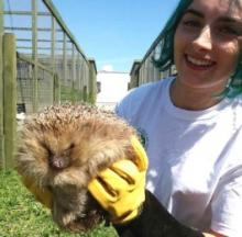 Scotland's Heaviest Hedgehog Put On Crash Diet