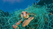 Plastic Pollution, A Major Threat To Our Wildlife