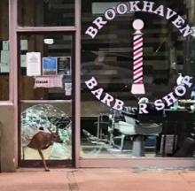 Deer Suffer Close Shave Breaking In & Out Of Mississippi Barber Shop