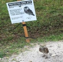 Owl Trolls Photographer By Posing In Front Of Sign