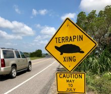 Friends of Hunting Island Welcomes A New Frequent Visitor