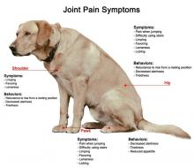 Dog with arthritic joints