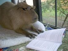 Intellectual Capybara