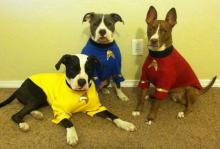 Star Trek Dogs