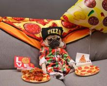 Pepperoni Pizza Pug