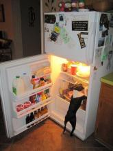 Fridge Dog