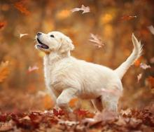 Autumn Puppy