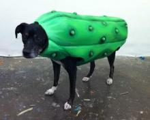 Pickle Dog