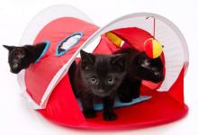 Hartz's Just for Cats Peek & Play Pop-Up Cat Tent Toy