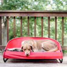 Gen7Pets Red Trailblazer Cot