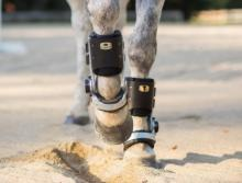 FastTrack orthotics for fetlock joints