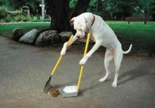 Dog cleaning up poop.