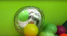 Marshall Pop-N-Play Ferret Ball Pit & Super Thru-Way