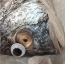 Fishmonger Busted For Putting Googly Eyes On Old Fish