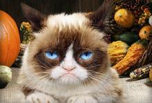 Grumpsgiving Cat