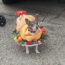 Turkey Dinner Dog