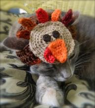 Turkey Cat