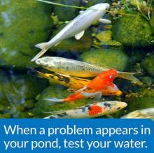 API Master Test Kit For Home Ponds
