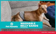 Parents Best Belly Band For Male Dogs