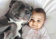 Sweet Pitt Bull With Infant