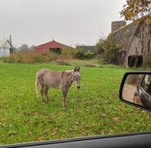 Mysterious Missing Michigan Donkey Saved By Social Media