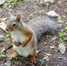 Busty Squirrel At Tokyo Zoo Drives The Internet Nuts