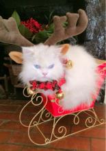 Christmas Sleigh Cat