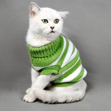 Cat in striped sweater