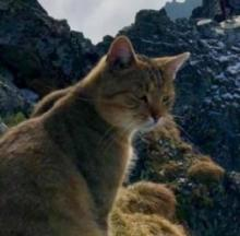 Mountain Climber Holds Summit Summit With Mysterious Cat