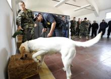 Navy dog detects drugs in test for her skills