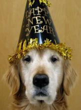 New Year's Dog