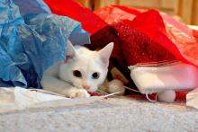 Christmas Wrapping Cat