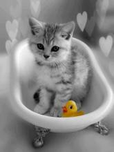 Kitten and Rubber Duckie