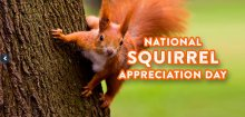 Did You Miss 'Squirrel Appreciation Day'?