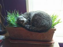 Cat Grass Nap