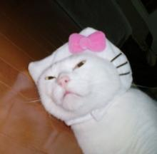 Hello Kitty Cat Costume has Gone to the Cats & Dogs
