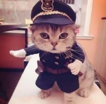 Feline Fuzz: 10 More Claw-Abiding Police Cats