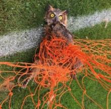 Wildlife Endangered By Unused Soccer Nets