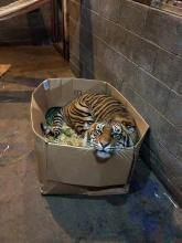 Tiger in the Box