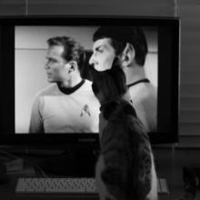 Cat Shatner Fan